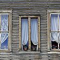 Three Windows by Geraldine Alexander