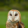 Three Wise Owls by Les Palenik