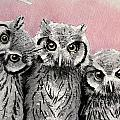 Three Wise Owls by Tanya Petruk