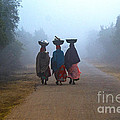 Three Women by Pravine Chester