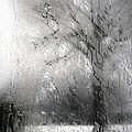 Through Glass -- A Tree In Winter by Cora Wandel