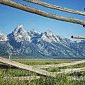 Through The Fence by Claudia Kuhn