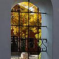 Through The Fence Window by Georgia Mizuleva
