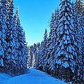 Through The Forest by Lynn Hopwood