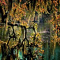 Through The Moss by Beth Akerman