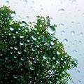 Through The Rain by Tahlula Arts