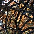 Through The Trees 2 by Jacklyn Duryea Fraizer