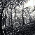 Through The Trees by Clara Kitchen