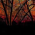 Through The Trees by Ericamaxine Price