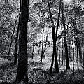 Through The Trees In Black And White by Kathy Clark