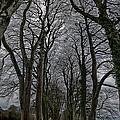Through The Trees by Jason Lanier