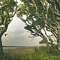 Through The Twisty Trees by Shane Holsclaw