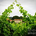 Through The Vines by Lainie Wrightson