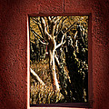 Through The Window by Tim Gumz