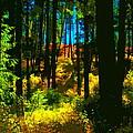 Through The Woods by Ben Upham III