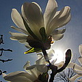 Thru The Flowers by Sarah Houser