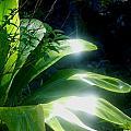 Ti Light by Karen Krause