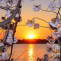 Tidal Basin Sunset With Cherry Blossoms by Jeff at JSJ Photography