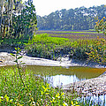 Tidal Creek In The Savannah by Duane McCullough
