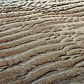 Tidal Footprint by Mamie Gunning