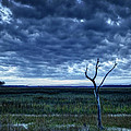 Tidal Marsh View by Phill Doherty