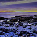 Tide Pools by Ingrid Smith-Johnsen