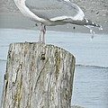 Tide Watcher by Chalet Roome-Rigdon