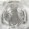 Tiger #1 by Stephen W Keller
