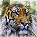 Tiger 26 by Ingrid Smith-Johnsen
