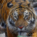 Tiger-5316-fractal by Gary Gingrich Galleries