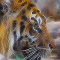 Tiger-5344-fractal by Gary Gingrich Galleries
