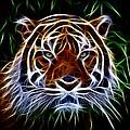 Tiger Abstact Art by Steve McKinzie