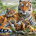 Tiger And Cubs by Adrian Chesterman