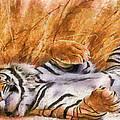 Tiger - Big Cat by Georgi Dimitrov