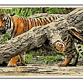 Tiger By The Log by Alice Gipson