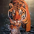 Tiger Crossing Water by Susana Falconi