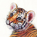 Tiger Cub Watercolor Painting by Olga Shvartsur