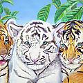 Tiger Cubs by Thomas J Herring