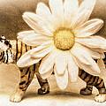 Tiger Dream by Jeff  Gettis