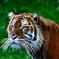 Tiger Dream by Steve McKinzie
