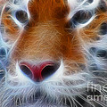 Tiger Face Fractal by Gary Gingrich Galleries