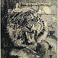 Tiger by Frank Papandrea