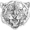 Tiger Head by Bryan Bustard