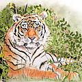 Tiger by Hilari Alsip