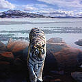Tiger In A Lake by Pati Photography