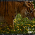 Tiger In The Midst Of Buttercups by Daniele Auvray