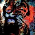 Tiger In The Mist by Wendie Busig-Kohn