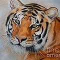 Tiger by Irisha Golovnina