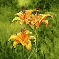 Tiger Lilies by Brett Winn