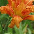 Tiger Lily by Kay Novy